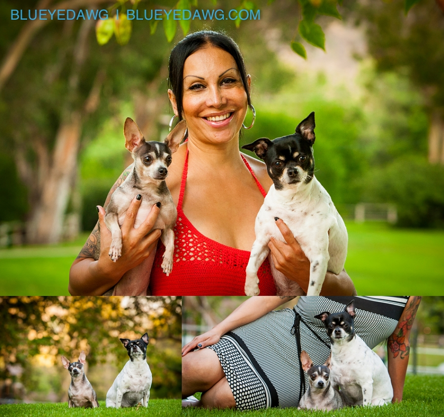 dog orange county pet photographer pictures  0008