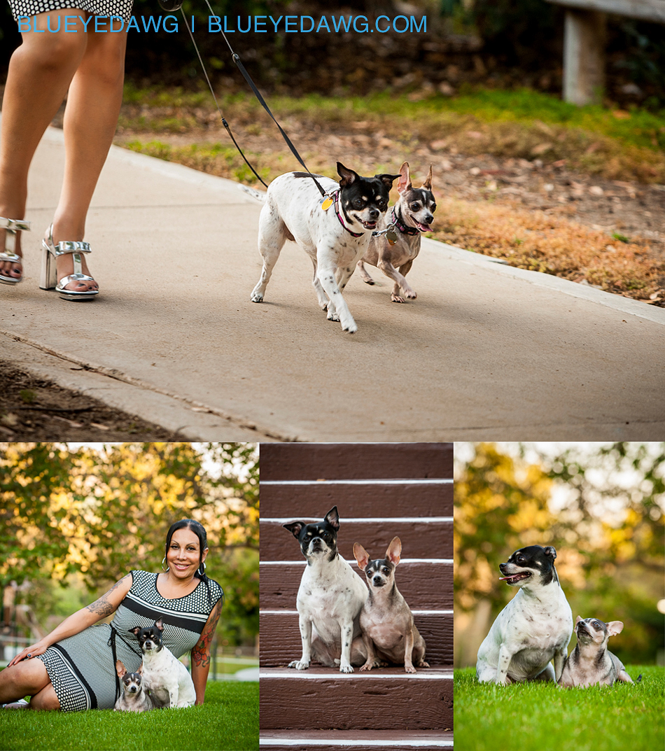orange county dog and pet photographer pictures