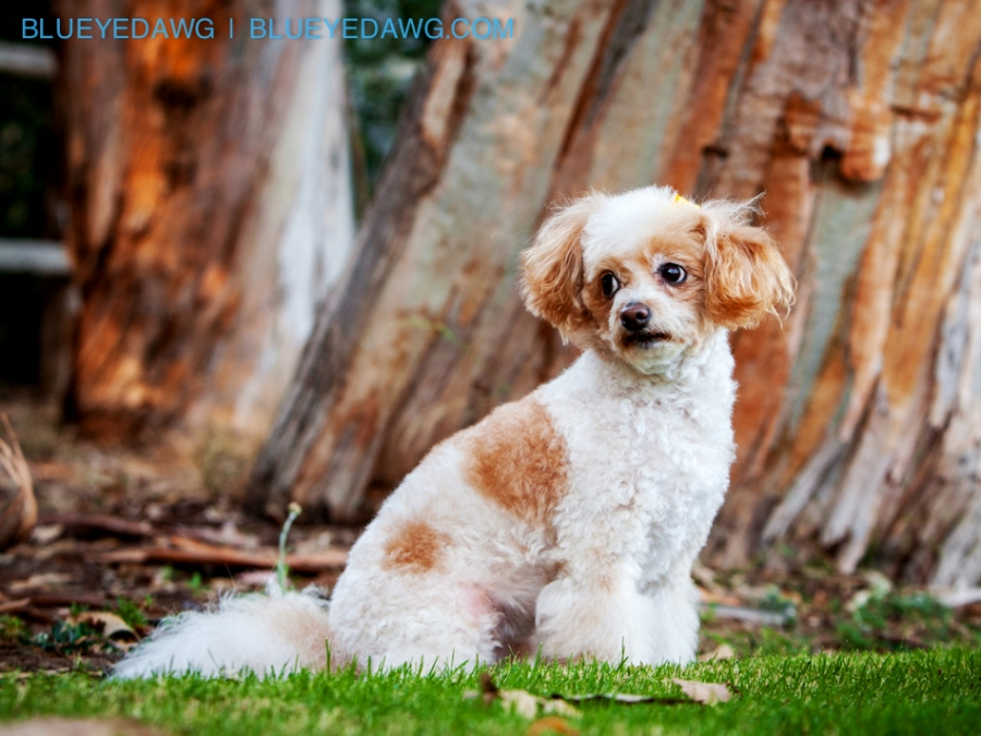 best orange county pet photographer prictures