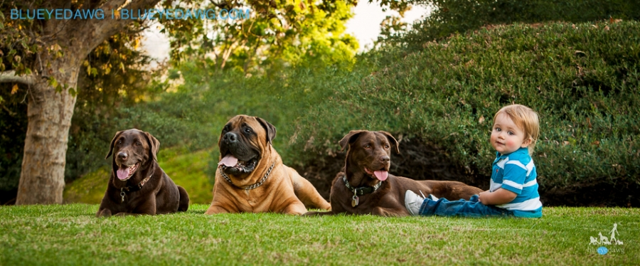 irvine, corona del mar, newport beach  pet photographer blueyedawg 3371