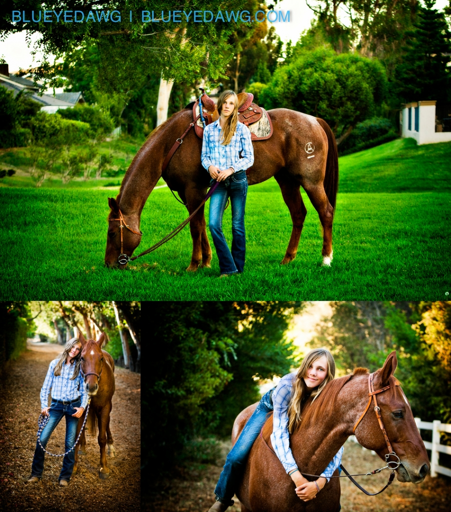 roan horse pet photography pictures